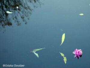 flowers floating in water